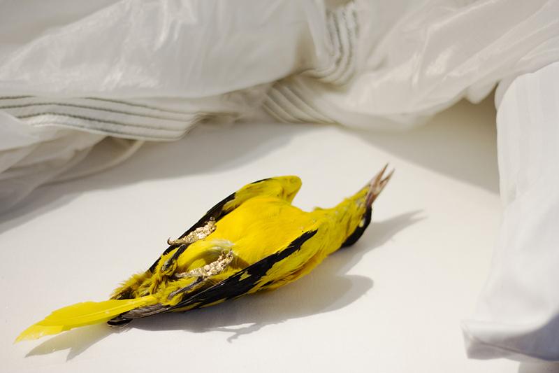 Detalle. Pájaro con pan de oro